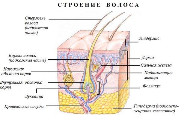 epilyaciya-i-depilyaciya